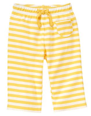 Baby Yellow Stripe Owl Stripe Knit Pant by Gymboree