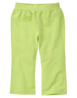 Green Tea Knit Pant by Gymboree