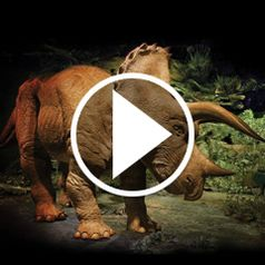 Watch The 20 Foot Animatronic Triceratops in action