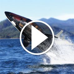 Watch The Killer Whale Submarine in action