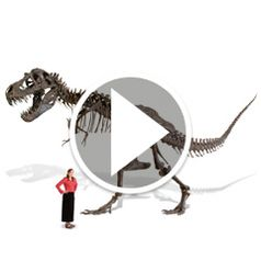 Play video for The Life Size Tyrannosaurus Skeleton