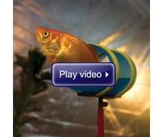 Watch The Fish Agility Training Set in action