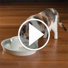 The Ceramic Pet Fountain