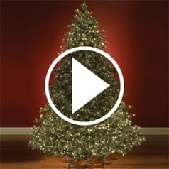 Watch World's Best Prelit Christmas Trees in action