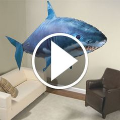 Play video for The Air Shark