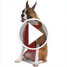 Watch The Temperature Moderating Pet Harness in action