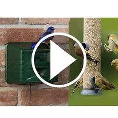 Watch The Ornithologists Song Bird Attractor in action