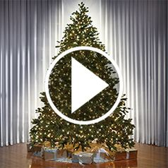Play video for  The Worlds Best Prelit Trees
