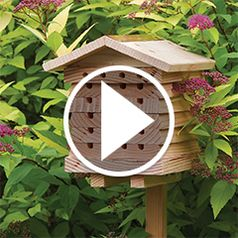 Watch The Bristish Horticulturist Bee House in action
