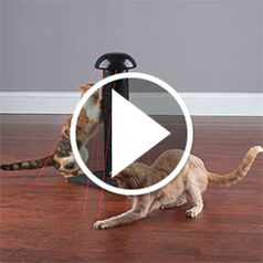 Play video for The Felines Laser Chasing Scratch Post