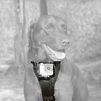 Kurgo Camera Mount Dog Harness