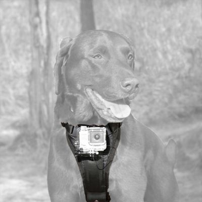 Kurgo Camera Mount Dog Harness